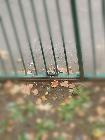 Squirrel Selective Focus Close-up Water Day Fallen Leaf Focus On Foreground Outdoors Full Frame Surface Level No People Differential Focus Relaxing LONDON❤ Taking Photos Hanging Out Animal Photography Nature Enjoying Life Nature On Your Doorstep Tranquility Adapted To The City