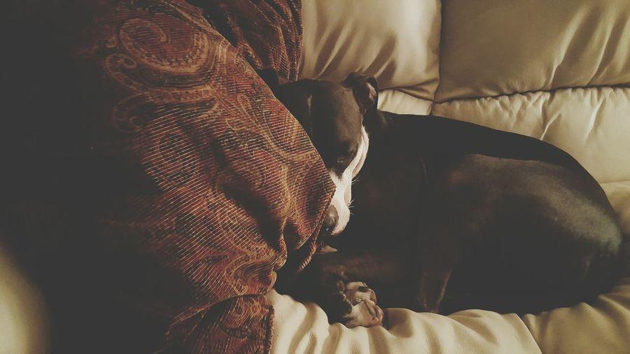 Gotta keep my PMA... My Dog Animal_collection Pitbull Dog Dog Love Dog❤ Dog Portrait Pup I Love My Pit Bull Pitbull Love Dog Life Enjoying Life Animal Photography Photography Animal Animal_collection Animal Animal_collection