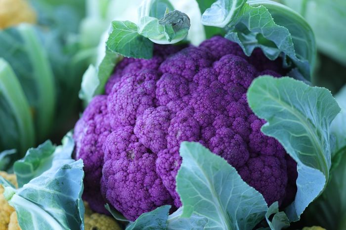 Califlower Vegetable Purple Healthy Eating Food And Drink Cabbage Food Leaf Raw Food Freshness Cauliflower Close-up No People Green Color Day Nature Growth Outdoors Beauty In Nature