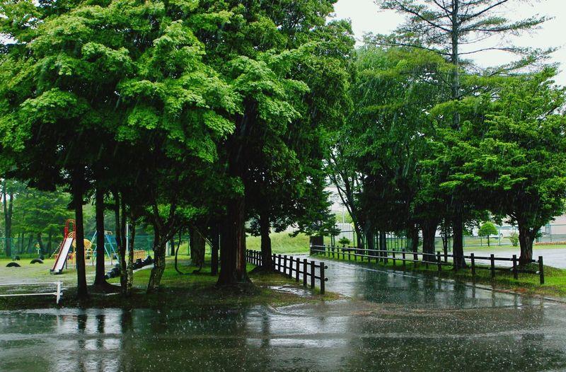 Rainy Rain Tree Plant Growth Green Color Water Nature Day Rain Wet Rainy Season Outdoors Park