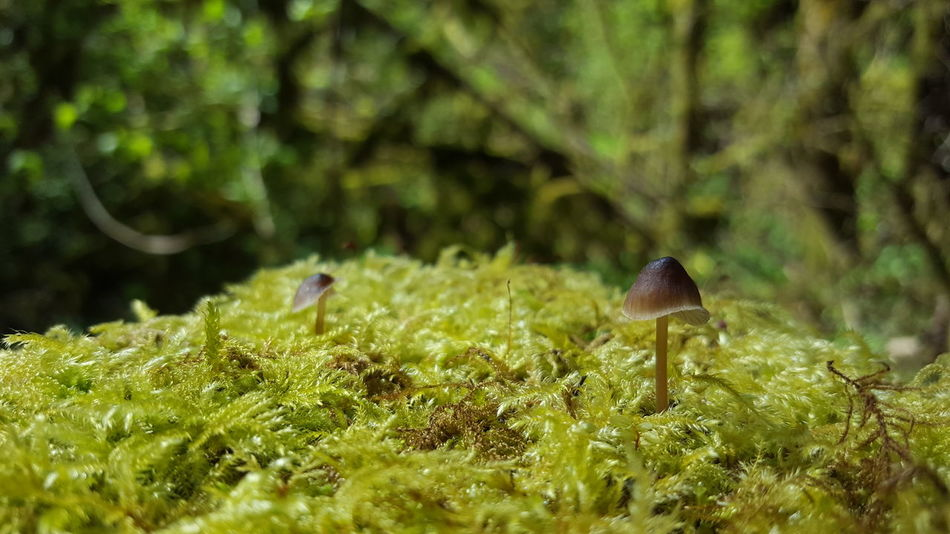 Mushroom Fungus Fungi Toadstool Gnome Home Moss Nature Growth Plant Outdoors Close-up Beauty In Nature No People Day