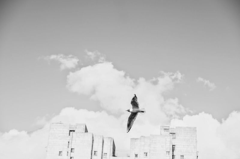 Birds Sky And Clouds Black And White Photography Blackandwhite Black And White Black & White Black&white Blackandwhite Photography Blackandwhitephotography NEM Black&white