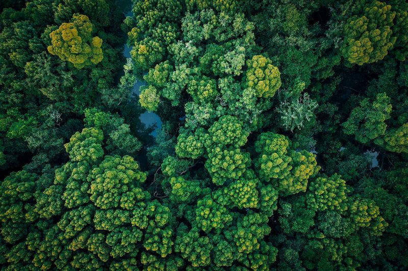 Drone shot of fresh green plants