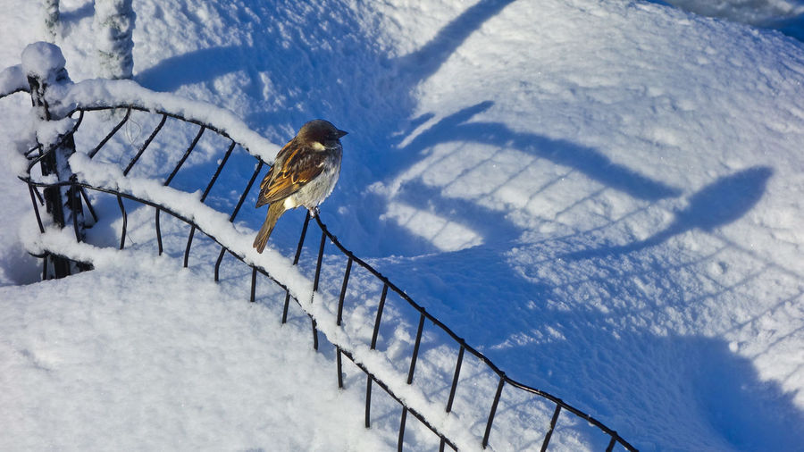 Winter Snow After The Storm Animal Wildlife Bird No People Shadow Sunlight White Color High Angle View Cold Temperature