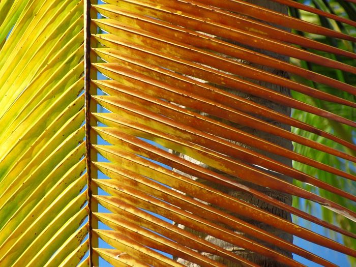 Pattern Palm Palm Tree Colors Nature Photography Abstract Panama City Natgeo Naturelovers Green Leaf EyeEm Textured  Colours Of Nature