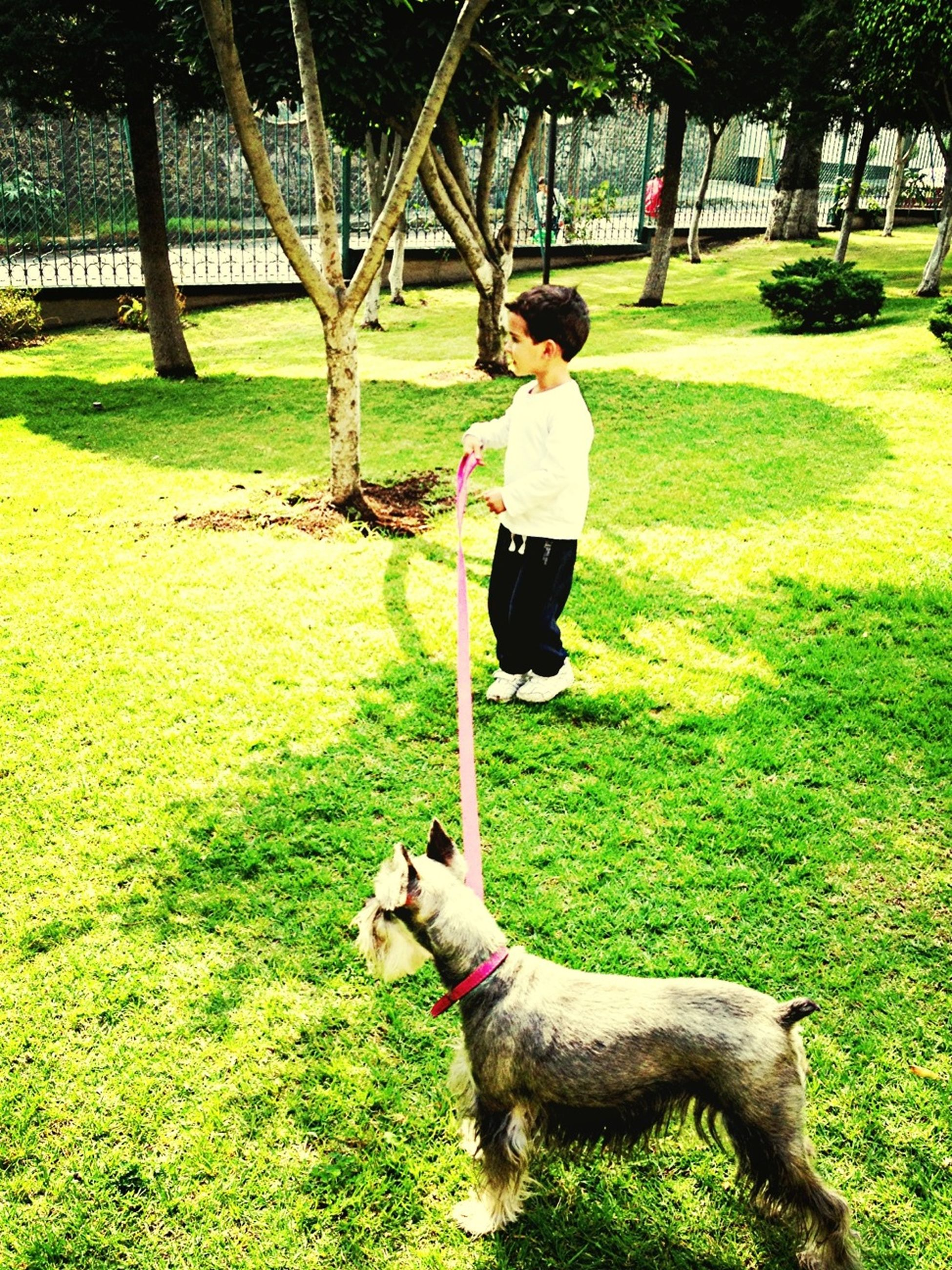 grass, full length, childhood, lifestyles, leisure activity, park - man made space, casual clothing, tree, elementary age, green color, grassy, boys, playing, field, park, playful, person, girls