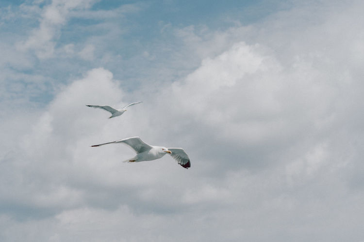 Landscape Photography Travel Animal Animal Themes Animal Wildlife Animals In The Wild Cloud - Sky Day Flying Greece Group Of Animals Landscape Lifestyles Low Angle View Mid-air Nature No People Outdoors Spread Wings Summer Vertebrate