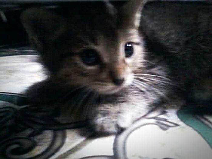 Cat♡ Cat Lovers Pets Feline Rethink Things