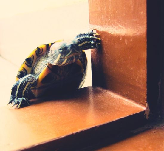 EyeEmNewHere Entering Doorway Turtle Turtle Cuteness Turtle Shell Turtles In The Sun Turtle Time Turtle Eyes Turtle Dove Turtle Love Turtle Tag TurtlePower Turtleneck Turtle_troy Turtlebeach Turtle 🐢