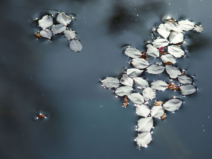Water Petal Tenryuu-ji Temple Kyoto EyeEm Gallery Landscape_Collection Japan
