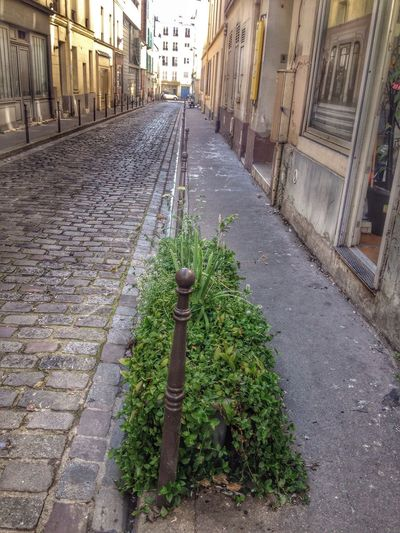Green in the city !! Streetphotography Street City Life Pavement Perspective Vanishing Point
