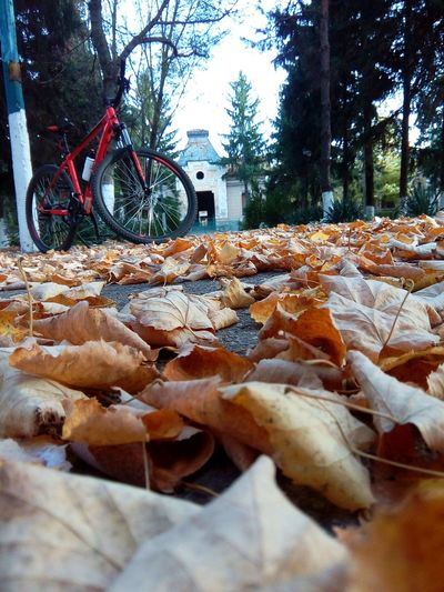 bike through dead leafes A Lot Of Leafes Autumn Bicycle Bike Cube Bikes Day Dead Leafes Golden Leafes Leaf Leafes Mode Of Transport No People Old Buildings Outdoors Stationary Tree Wheel
