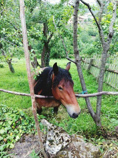 Horse Animal Themes Nature EyeEmAnimalLover Horse Photography  Horses Caballos 🐎🐎👢