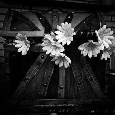 Ink flowers. Ig_valencia_bw