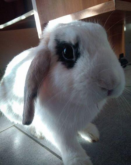 THE Bunny  Coniglionano Arietenano Coniglionanoariete Bunniesofinstagram Bunniesworldwide Bunniesofinstagram Bunnys