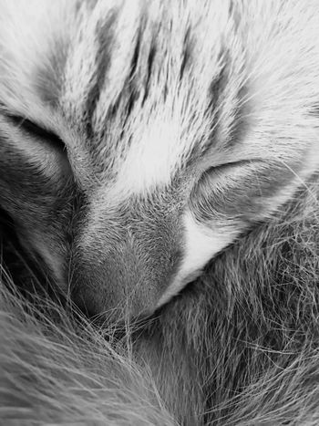Cat nap One Animal Domestic Animals Sleeping Pets Mammal Close-up Feline Domestic Cat No People Animal Body Part Animal Themes Indoors  Day