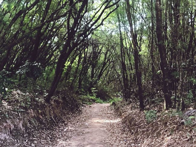 Tree Plant Forest Growth Direction The Way Forward Land Tranquility Beauty In Nature Dirt Road Non-urban Scene Nature No People Green Color Day Road
