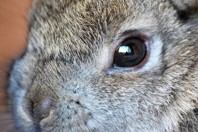 Rabbit 🐇 Eyes Are Soul Reflection Baby New Life Refelction