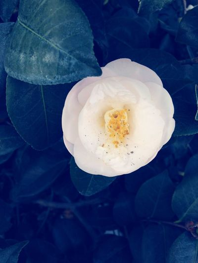 Flower Nature Petal Beauty In Nature Freshness Fragility Flower Head No People Plant Growth Close-up Day Outdoors