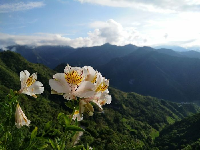 orchids from the mountains of cordillera Mountain View Flowers Outdoors Nature Orchid White Flower