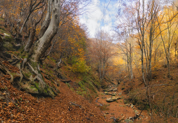 Trees growing in forest during autumn