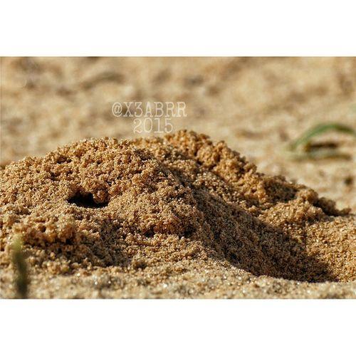 صورة رمل حفرة نمل تصويري تركيز فوكس sand ant ants Hole Focus photo beautiful sunrise day @instaghelper sun summer mothernature nature cloudporn green sky photooftheday beach sunset beauty night weather clouds
