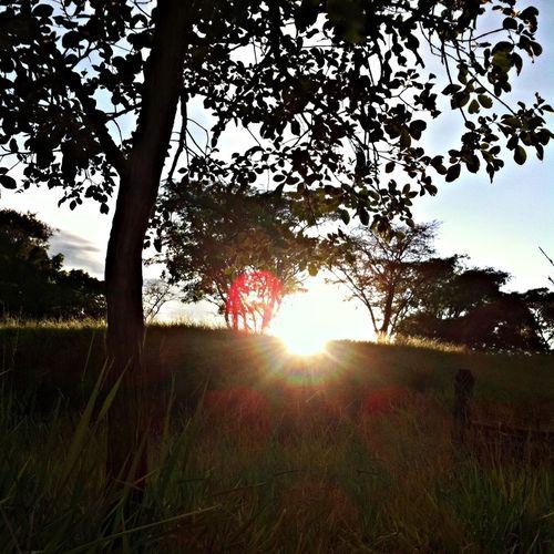 Sunrise... Summer