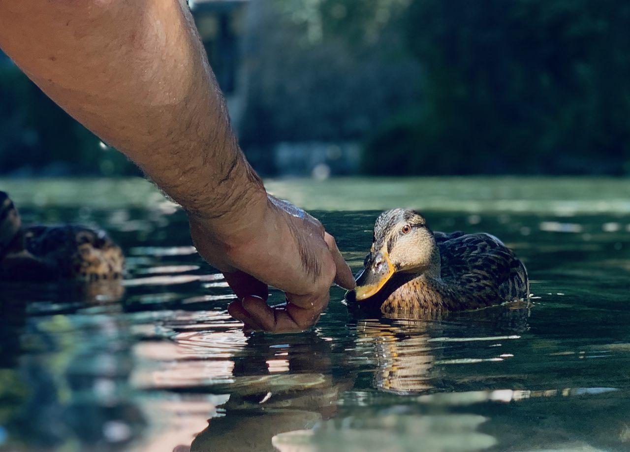 CLOSE-UP OF HAND EATING BIRD