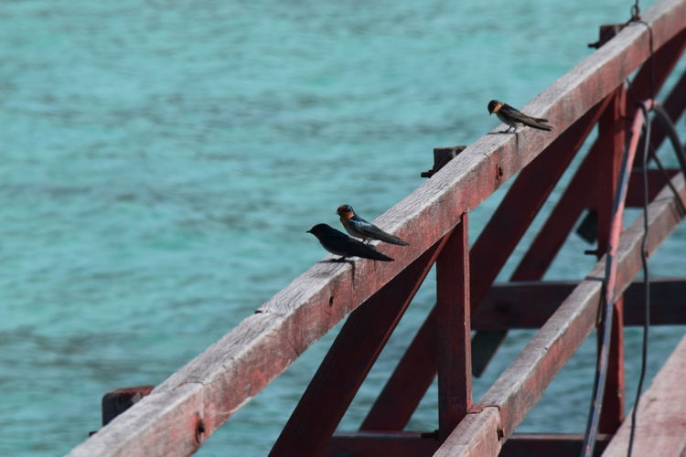 High angle view of birds perching on railing over sea