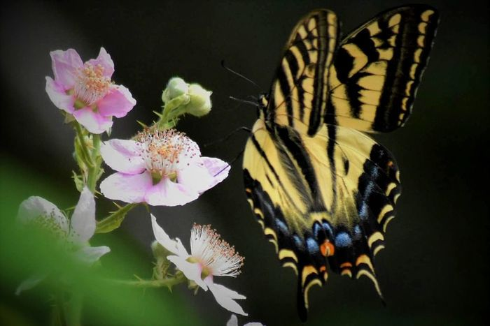 Flower Fragility Butterfly - Insect Close-up Petal Nature Freshness Pink Color No People Beauty In Nature Tranquility Flower Head Plant Multi Colored Outdoors Day