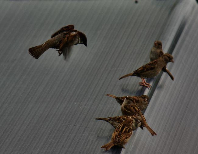 Dead bird flying