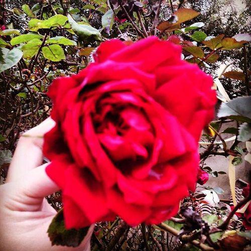 """""""Si quieres una rosa roja - dijo el rosal-, tienes que fabricarla con música, a la luz de la luna y teñirla con la sangre de tu corazón. Debes cantar con tu pecho apoyado sobre una de mis espinas. Debes cantar toda la noche hasta que la espina atraviese tu corazón y la sangre de tu vida fluirá en mis venas y se hará mía..."""" - El Ruiseñor y la rosa (Oscar Wilde) Cuentosdeoscarwilde Oscarwilde Tale  Cuento Bookstagram Instabook Leeressexy AmoLeer Bibliophile  Bookaholic Amoloslibros Naturelover EyeEm Nature Lover Nature"""