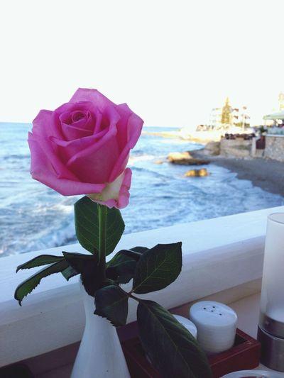 Rosé Ocean Resturang