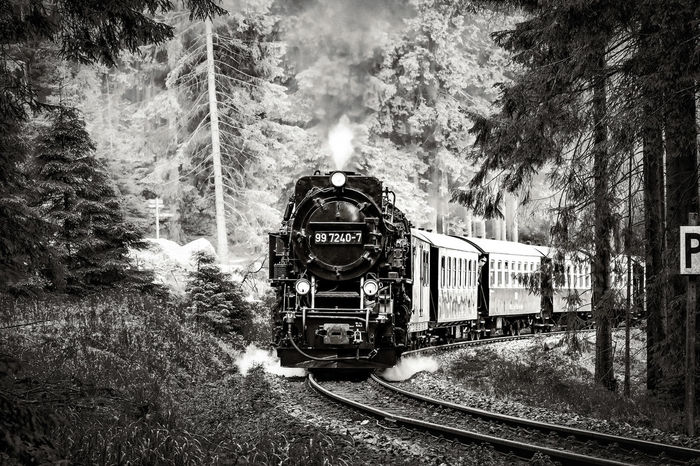 Transportation Day Outdoors Tree Real People One Person Men One Man Only Sky People Harzer Schmalspurbahn Harzreise Harz Mountains, Germany Beliebte Fotos The Week On EyeEm EyeEm Selects Travel Destinations Your Ticket To Europe Forrest Trail Forrest Views Dampflock Public Transportation Rail Transportation Railroad Track Black And White Photography Black And White Friday