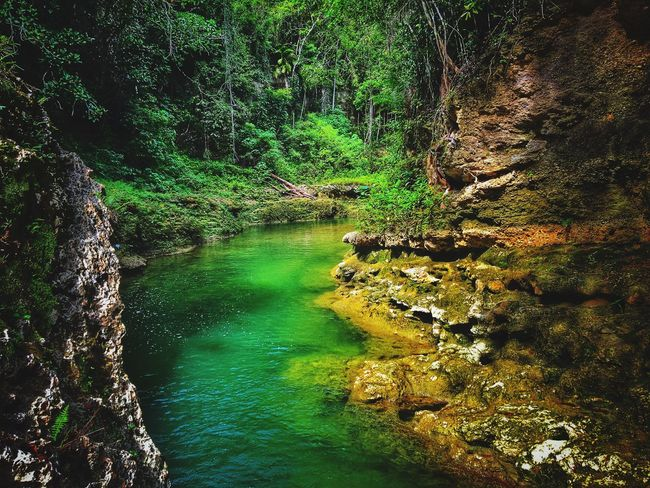 Nature Water Beauty In Nature Scenics Forest Green Color Landscape Vacations Tranquil Scene River Idyllic Flowing Water Tranquility Travel Destinations Tree Waterfall Outdoors Canyon