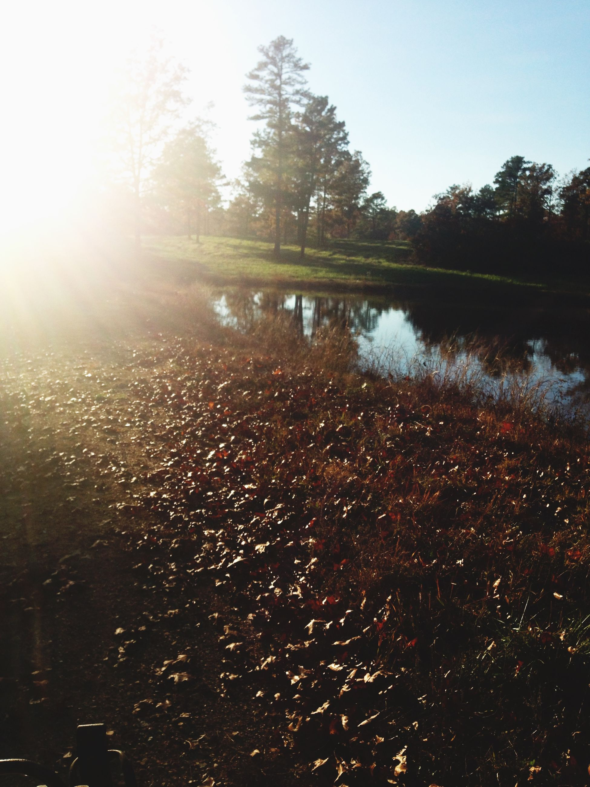tree, water, sun, reflection, sunbeam, sunlight, lake, clear sky, lens flare, tranquility, river, tranquil scene, nature, beauty in nature, scenics, growth, outdoors, sunny, bright, sky