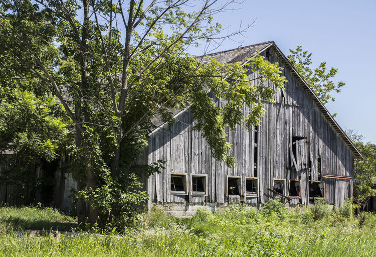 A decaying barn in a rural area. Rustic Weathered Abandoned Architecture Barn Building Exterior Built Structure Day Decaying Barn Field Grass No People Outdoors Rural Scene Tree Wood - Material Wooden