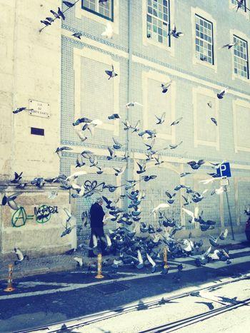 Pigeons ATTACK