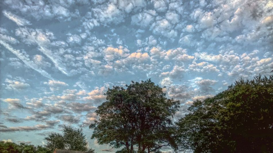 Blue Sky Clouds And Sky Cloudscapes Outdoors Scenics Sky Trees Trees And Sky Treetop