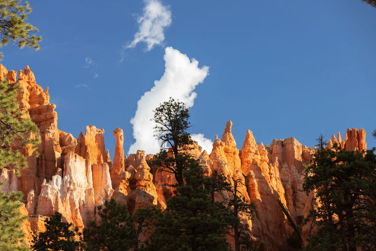 shiny rocks of Bryce Canyon Sky Beauty In Nature Nature Tranquil Scene No People Plant Tranquility Outdoors Bryce Canyon Rock Formation Rock Rock - Object Solid Travel Destinations Travel Tree Geology Non-urban Scene Physical Geography Scenics - Nature Day Tourism Eroded Formation Arid Climate