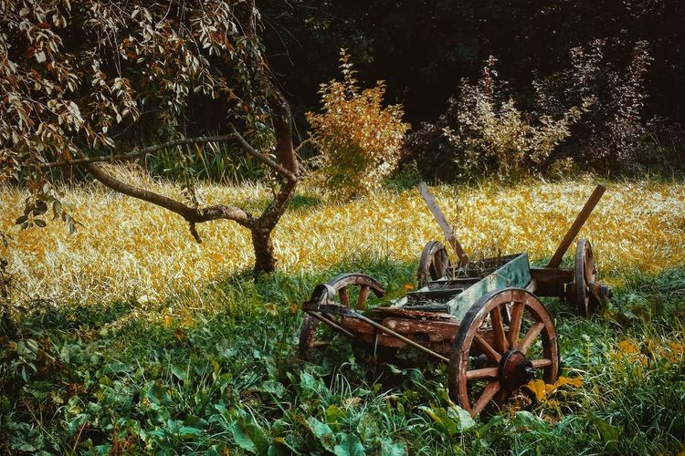 Abandoned Autumn Autumn Colors Cart Day Growth Horse Cart Nature No People Old-fashioned Outdoors Transportation Tree