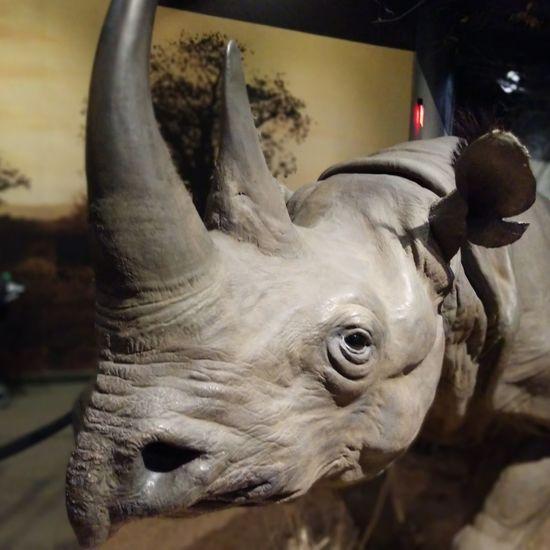 UnderSea Rhinoceros City Close-up Animal Eye Animal Head