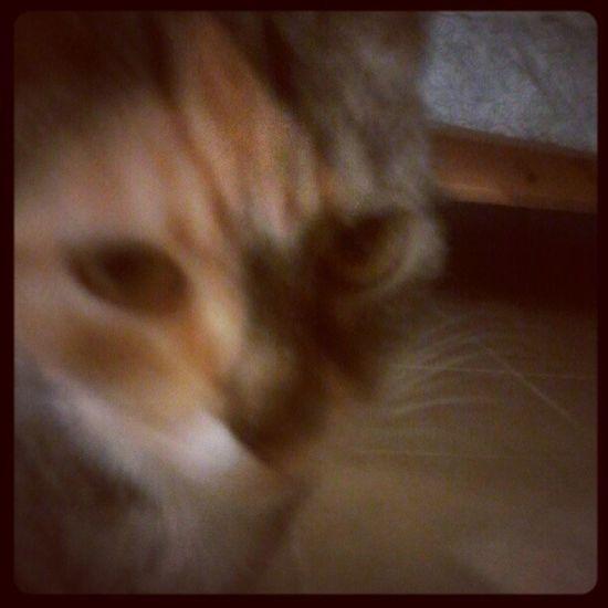 Artsy blurry cat. 25