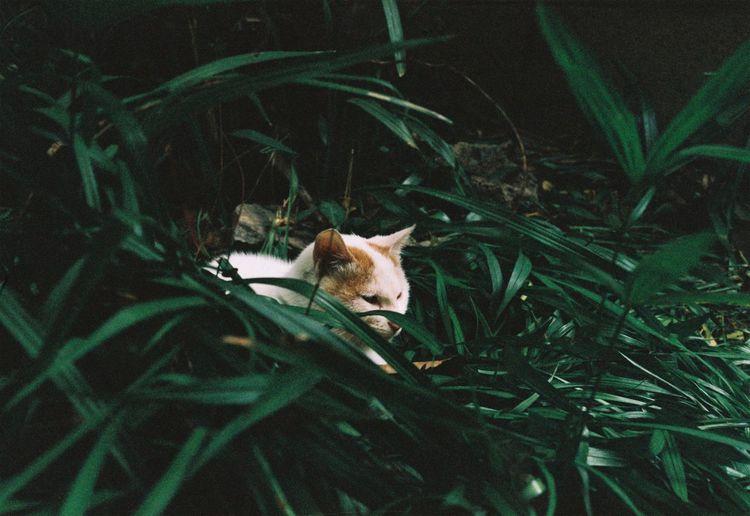 Animal Animal Themes One Animal Vertebrate Mammal Animal Wildlife Plant