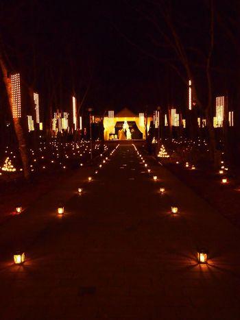 Taking Photos Wedding Illumination Christmas