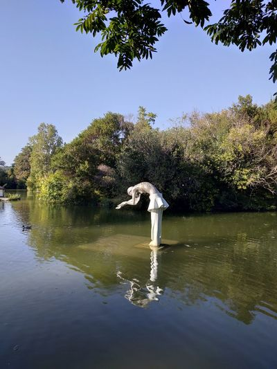 Swan Bird Tree Water Lake Clear Sky Reflection Swimming Flamingo Alligator
