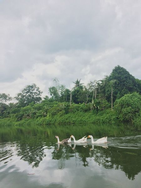 Ducks At The Lake Water Lake Philippines Bacolod Nature Day No People Outdoors EyeEmNewHere
