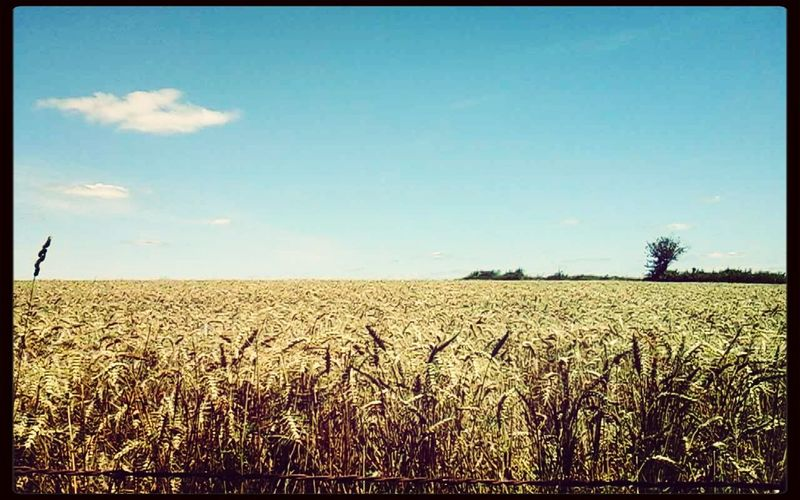 Summer ☀ Blue Sky