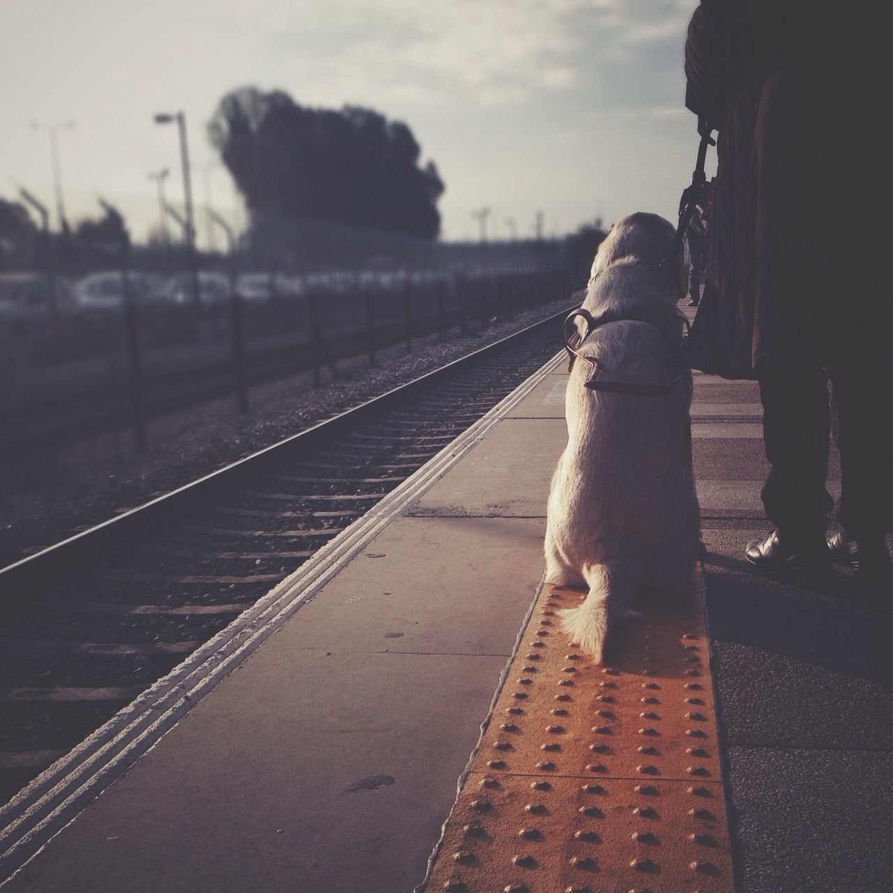 Low section of man with his dog waiting for train