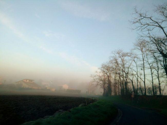 Tree Fog Rural Scene Sky Landscape